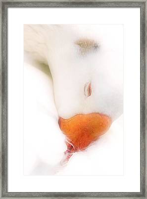 Dreamy Framed Print by Geraldine Scull