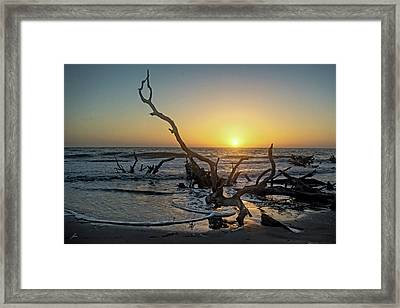 Driftwood Beach Framed Print by Patricia Turo