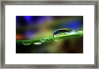 Drop Of Green Framed Print by Gary Yost