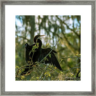 Drying Time Framed Print by Marvin Spates