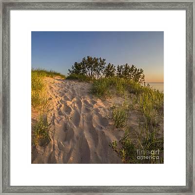 Dunegrass At Sunset Framed Print