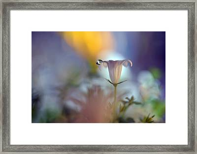 Dusk Drop Framed Print