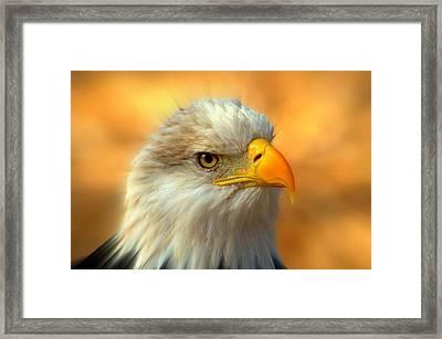 Eagle 10 Framed Print by Marty Koch