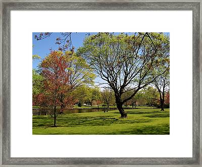 Early Spring Framed Print by John Scates