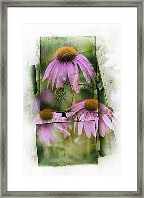 Echinacea Framed Print by Jeff Klingler
