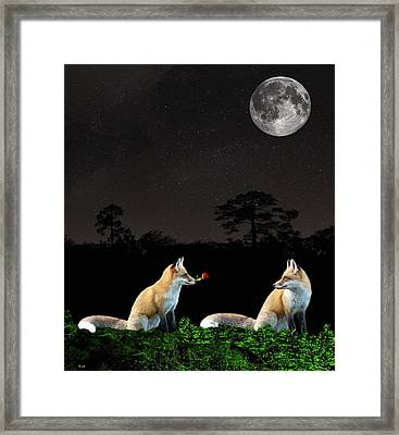 Eftalou Foxes Framed Print