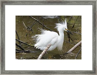 Egret Bath Framed Print