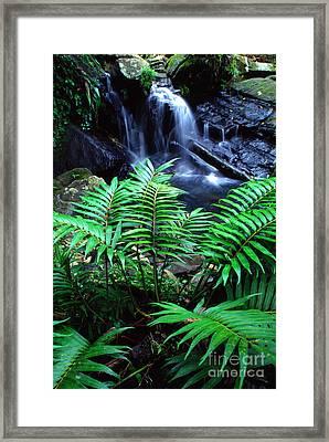 El Yunque Waterfall Framed Print