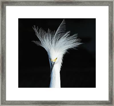 Framed Print featuring the photograph Electrifying by Fraida Gutovich