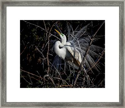 Framed Print featuring the photograph Elegant Egret by Kelly Marquardt