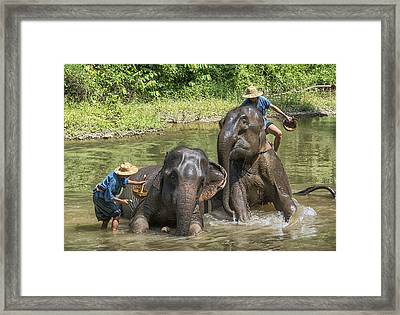 Framed Print featuring the photograph Elephant Bath by Wade Aiken