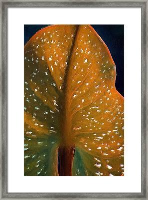 Elephant Ear Framed Print by Bonnie Bruno