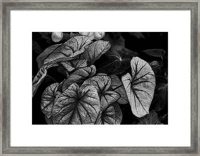 Elephant Ears Framed Print by Lisa Yount