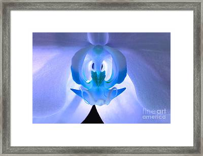 Elusive Dream Framed Print