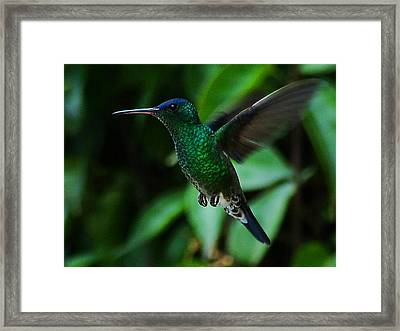 Framed Print featuring the photograph Emerald Glow by Blair Wainman