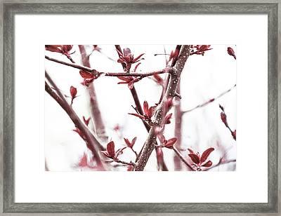 Emerge -  Framed Print