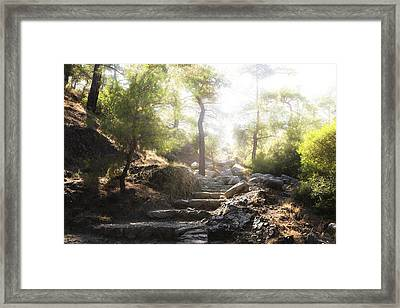 Enchanted Forest Framed Print by Joana Kruse