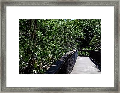 Framed Print featuring the photograph Enchanted Walk by Gary Wonning