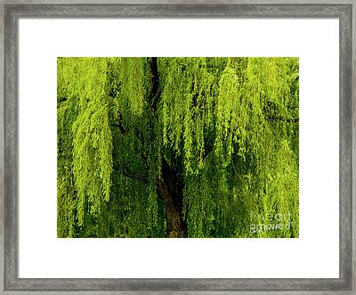 Enchanting Weeping Willow Tree  Framed Print
