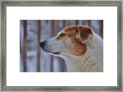 Enchantment Framed Print by JAMART Photography