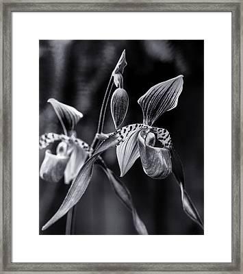 Encinitas Orchid Framed Print