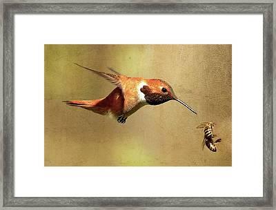 Encounter Framed Print