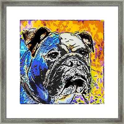 English Bulldog Framed Print by Alexey Bazhan
