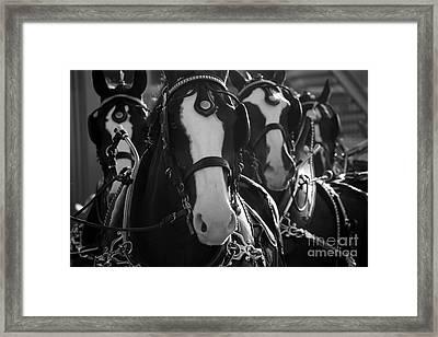 Framed Print featuring the photograph Equine Elegance by Wilko Van de Kamp
