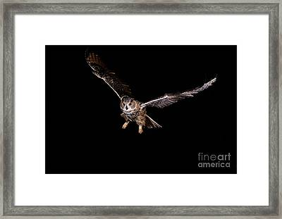 European Eagle Owl Bubo Bubo Framed Print by Gerard Lacz