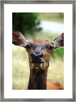 European Red Deer Framed Print by Thea Wolff
