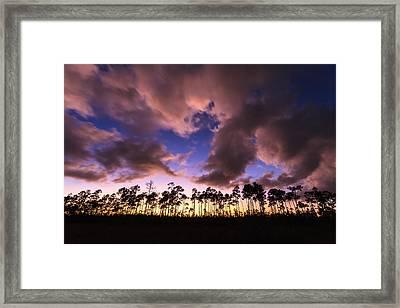 Everglades Sunset Framed Print by Jonathan Gewirtz