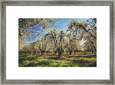 Framed Print featuring the photograph Everything Is New Again by Laurie Search