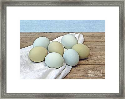 Exotic Colored Chicken Eggs Framed Print