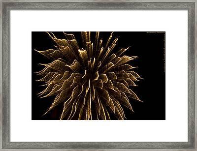 Explosive Flowers 1 Framed Print by Heinz - Juergen Oellers