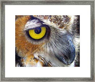 Eye Of The Owl Framed Print by Merton Allen