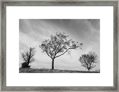 Three Trees Framed Print by John Adams