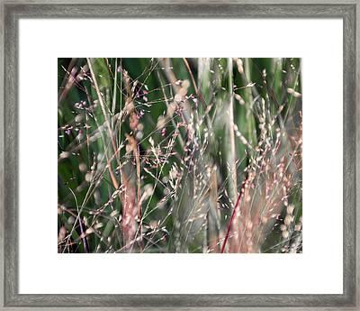 Fairies In The Grass - Framed Print