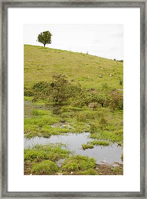 Framed Print featuring the photograph Fairy Tree In Ireland by Ian Middleton