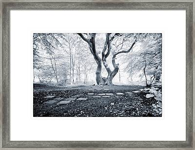 Fairy Tree Framed Print