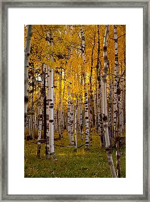 Fall At Snowbowl Framed Print