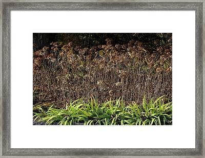 Framed Print featuring the photograph Fall Contrasts by Deborah  Crew-Johnson