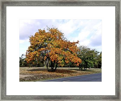 Fall Finery Framed Print by Wilbur Young