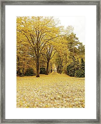 Framed Print featuring the photograph Carpet Of Golden Leaves by Ivy Ho