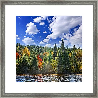 Fall Forest In Sunshine Framed Print by Elena Elisseeva