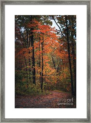 Fall In Arkansas Framed Print