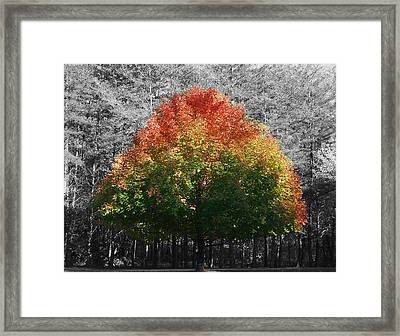 Fall In Bloom Framed Print by Navarre Photos