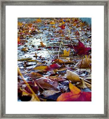Fall Framed Print by Jason Leonti
