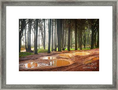 Fall Landscape Framed Print by Carlos Caetano