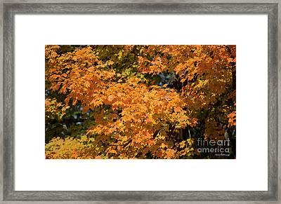 Fall Leaves 7 Autumn Leaf Colors Art Framed Print