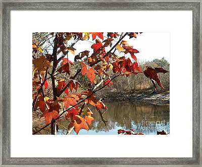 Fall On The Withlacoochee River Framed Print